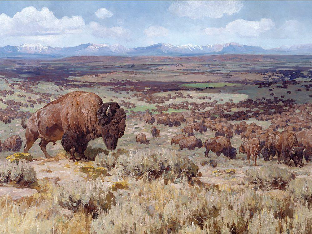 American Serengeti cover art