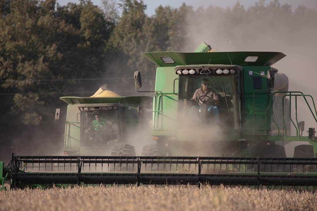 Farmers in combines harvests soybeans