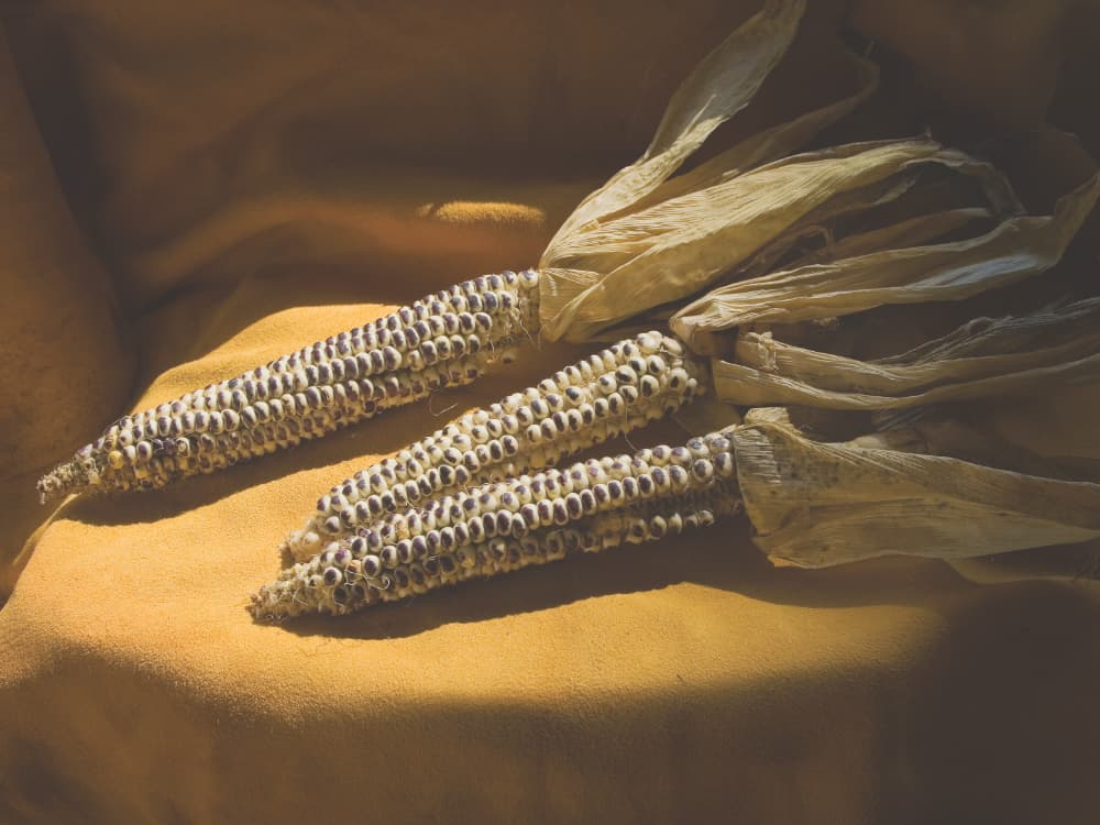Pawnee Eagle Corn, Prairie Fire and Ken Bouc/NEBRASKAland Magazine