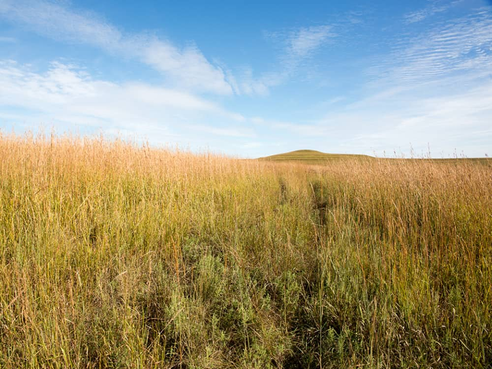 Spring Creek Prairie by Melissa Borman